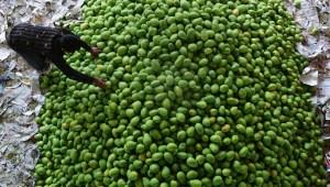 A FIlipinas le sobran 2 millones de mangos
