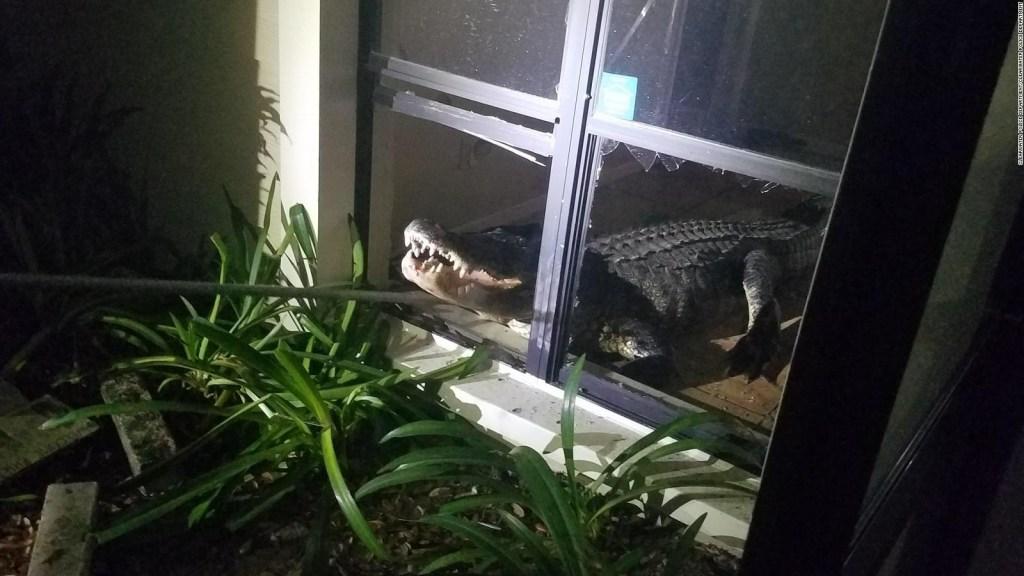Un intruso en la casa