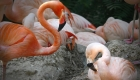 Dos flamencos del Zoológico de Denver se unen a la campaña del Orgullo LGTBQ