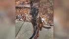 De perra callejera a detectar explosivos como policía K9