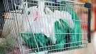 Panamá prohibe el uso de bolsas de plástico