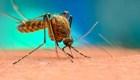 Honduras, en alerta por casos de dengue hemorrágico