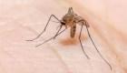 Florida alerta por virus mortal transmitido por mosquito