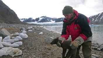 Zorra del Ártico viaja más de 3.000 kilómetros en solo 76 días