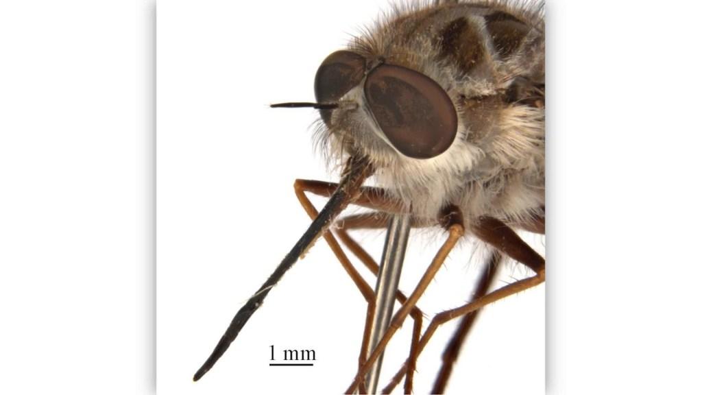 Bautizan a mosca en honor a Night King, de Game of Thrones