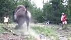 Video muestra ataque de bisonte a niña