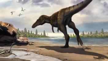 Descubren el primer Tyrannosauripus en China