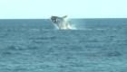 Este es el mejor destino en Sudamérica para observar ballenas
