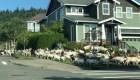 """Cabras """"cortacésped"""" invaden un vecindario de EE.UU."""