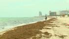 La operación de limpieza de las playas de Miami