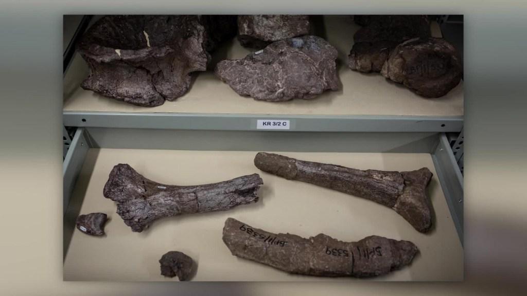Descubren nueva especie de dinosaurio en Sudáfrica