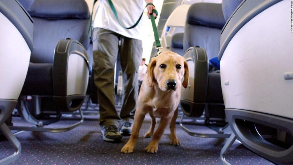 Nuevas reglas animales de apoyo en aviones Depto. Transporte EE.UU.
