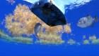 La contaminación llega al Triángulo de las Bermudas