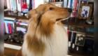 El perro del precandidato Fernández es furor en las redes sociales