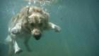 Estos estanques pueden ser mortales para los perros
