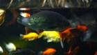 """El jardín ecológico en el que """"trabajan"""" peces"""