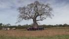 En Paraguay buscan el mejor árbol