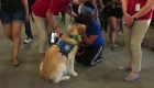 Terapia con perros para ayudar a las víctimas de El Paso