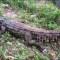 Niños se salvan de un posible ataque decocodrilo