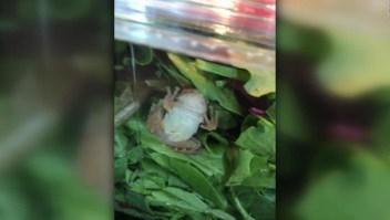 ¿Quiere una rana con su ensalada?