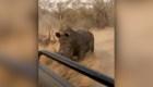 Turistas escapan de la embestida de un rinoceronte