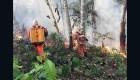 Amazonía y la deforestación como causante de incendios