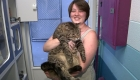 Este enorme gato busca un nuevo hogar