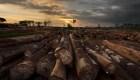 ¿Qué cinco países perdieron más hectáreas de árboles?