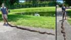 Una pitón de más de 5 metros fue capturada en Florida