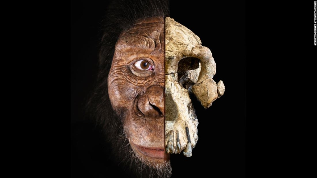 Ancestro anamensis
