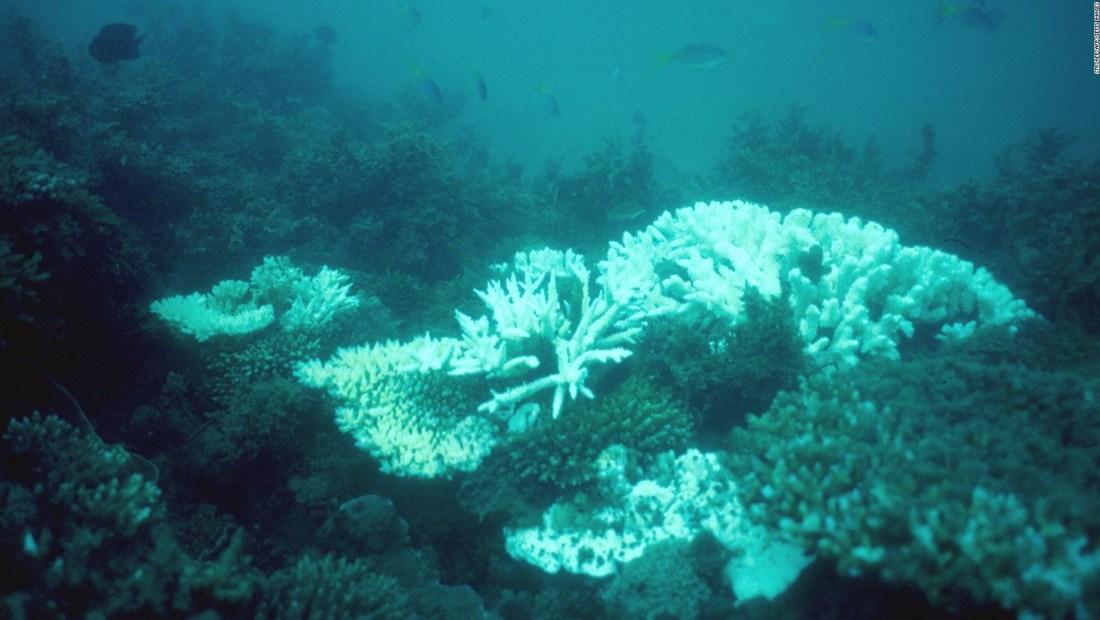 Empeora el pronóstico para la Gran Barrera de Coral