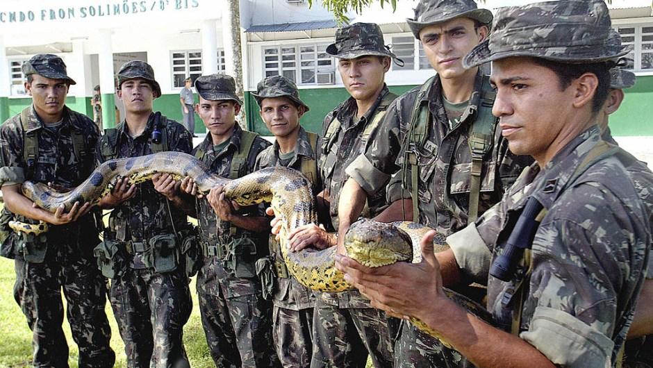 Anaconda Brasil