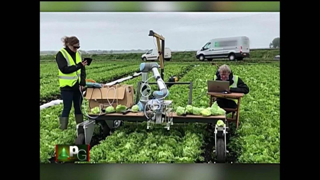 Vegebot: El robot que recoge lechugas sin aplastarlas