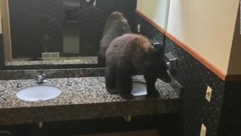 Mira el rescate de este oso del baño de un hotel