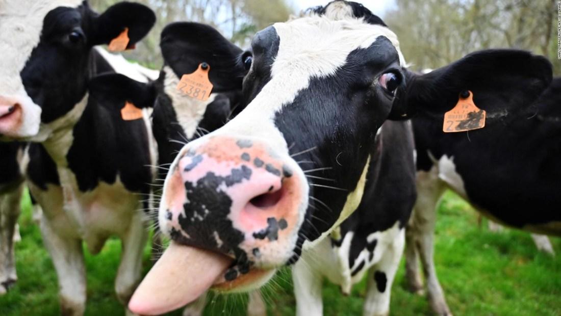Disminuir consumo de carne, ¿ayuda a frenar el cambio climático?