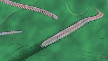 Estas huellas tienen 500 millones de años