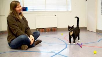 Los gatos crean lazos con las personas