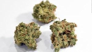Cannabis: Cámara de Representantes aprobó ley bancaria