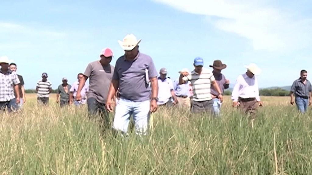 Nuevas visas estadounidenses para agricultores salvadoreños