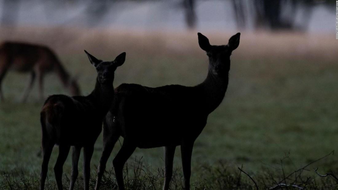 """Enfermedad del ciervo """"zombi"""" amenaza a Nevada"""