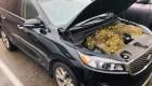 Ardillas guardaron 200 nueces debajo del capó de un SUV