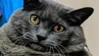 El entrenamiento de gata obesa se vuelve viral