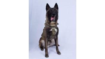 La imagen del perro que capturó a al-Bagdadi