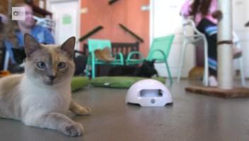 Así puedes celebrar el Día Nacional del Gato