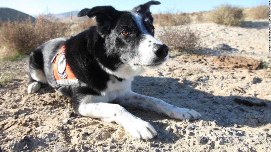 perros conservacion especies en peligro de extincion