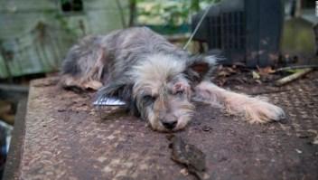 Ley de crueldad animal