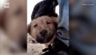 Rescatan a perro abandonado en operación de al-Baghdadi