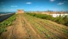 Granjas urbanas crecen en las azoteas