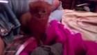 Mujer argentina adopta un puma por confusión