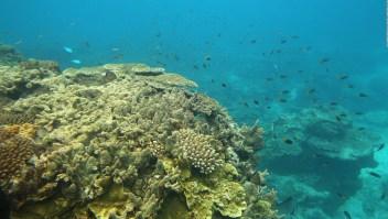 Robots regeneran la Gran Barrera de Coral de Australia